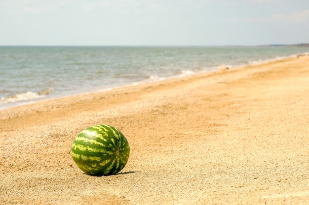 The striped green fruit of a ripe sweet watermelon on the sea sand by the water rest on the sea copy space