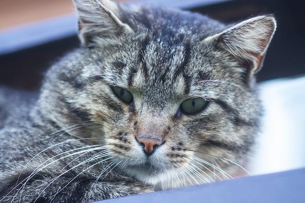 Полосатая серая домашняя кошка на открытом воздухе