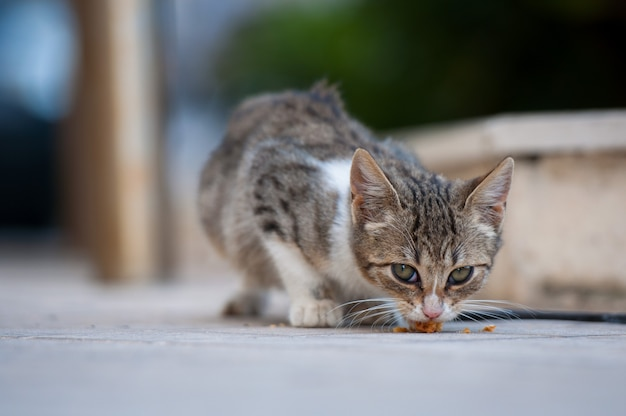 Striped kitten eats dry food on the pavement.