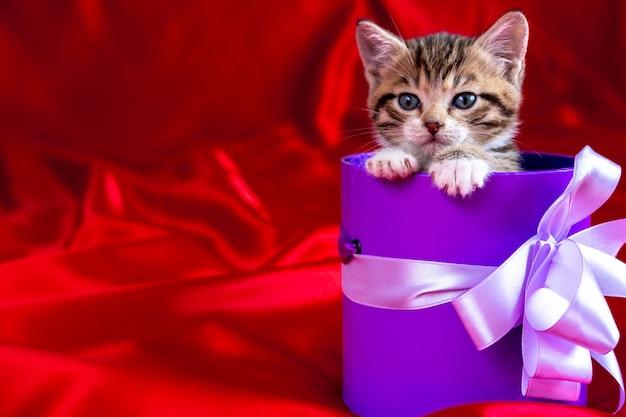 Полосатый котенок выглядывает из подарочной коробки на красном фоне.