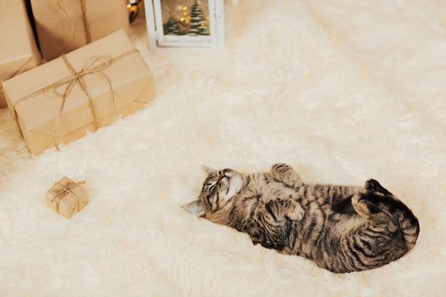 縞模様の子猫が眠ります。