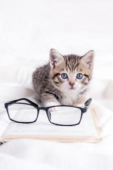 白いベッドの上に横たわっている本と眼鏡と縞模様の子猫。賢いかわいい飼い猫