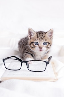 Striped kitten with book and eyeglasses lying on white bed. clever cute little domestic cat
