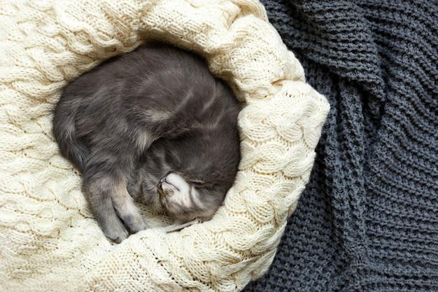 白いふわふわの毛布の上で丸く眠っている縞模様のぶち灰色の子猫