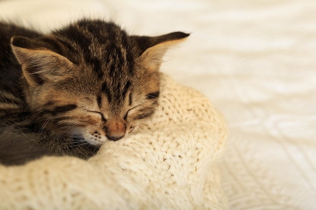 Полосатый котенок табби спит свернуться калачиком на белом пушистом одеяле. красивый пушистый милый серый котенок. кошка, детеныш животного, котенок лежит на белом пледе.