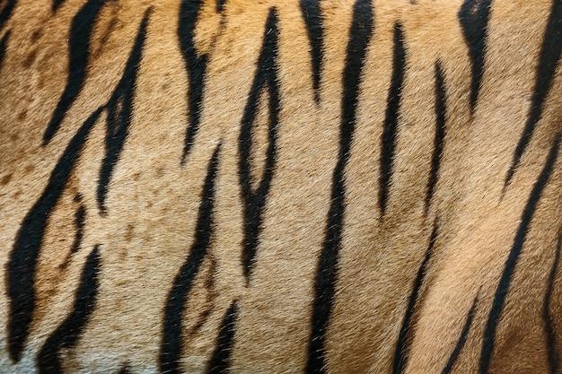 Полосы на коже бенгальского тигра (мех)