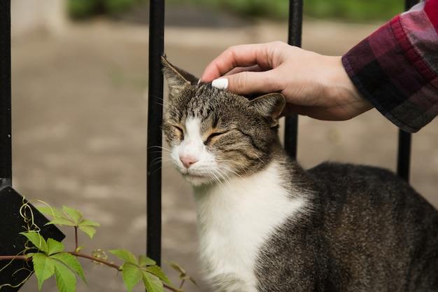 머리에 고양이 쓰다듬어. 거리에 노숙자 고양이입니다.