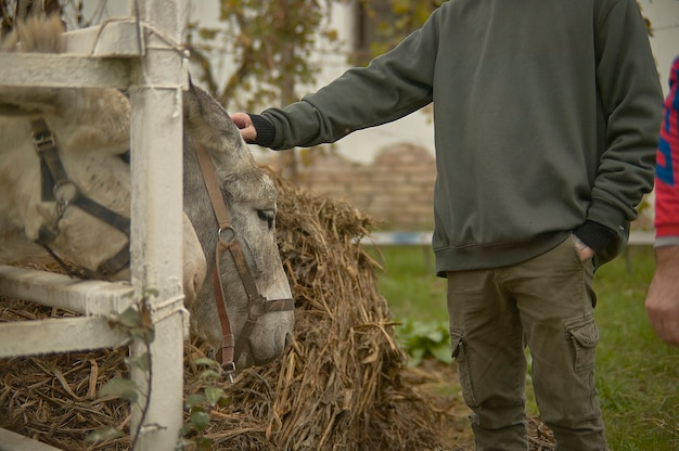 Stroking a donkey on the fence in a breeding