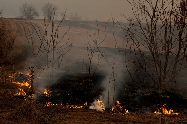A strong fire spreads in gusts of wind through dry grass, smoking dry grass, concept of fire and burning of the forest.