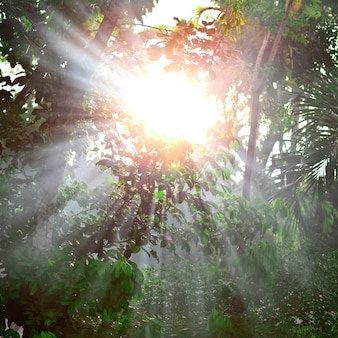 Strong light in tropical forest