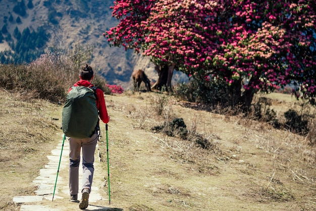 A strong man climbs uphill with a large backpack. concept of hiking in the himalayan mountains.