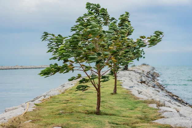 強い風が海で木を吹く