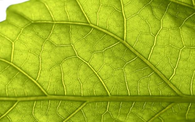 Structure of green leaf closeup