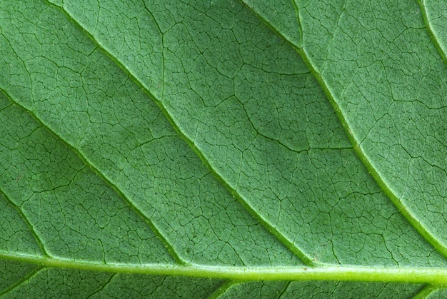 Structure of leaf