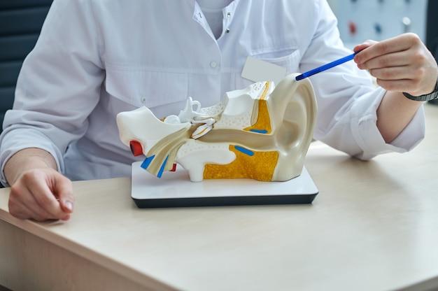 귀의 구조. 흰색 코트를 입은 이비인후과 의사의 손은 얼굴이 없는 모형에 인간 귀의 포인터 구조를 보여줍니다.