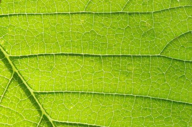 잎 자연 배경의 구조