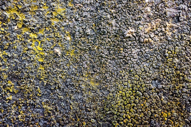 Structure, the surface of the resin-covered wall on which the moss grows