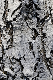 The structure of the tree bark, to protect the wood from insects and pests