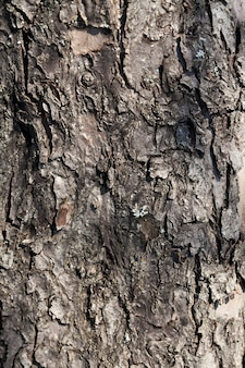 The structure of the tree bark