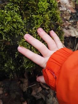 春の森の乾燥した松葉と子供がそれを手渡す緑の新鮮な苔のスタブ