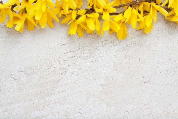 Stucco texture with sprigs of spring yellow flowers. mock up for your text.