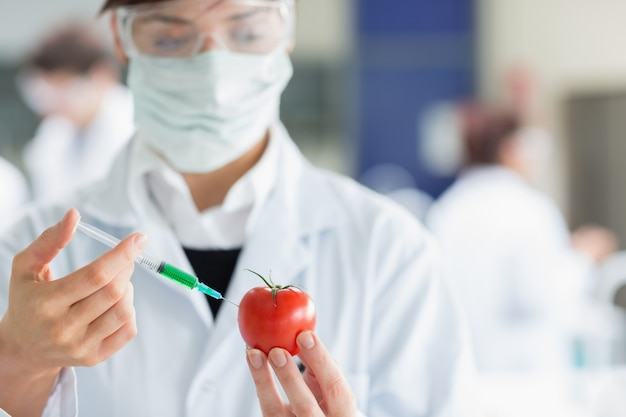 Student injecting tomato in the laboratory