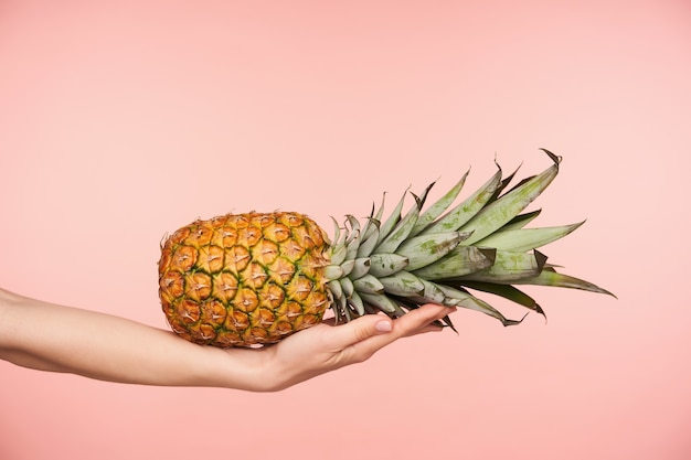 ピンクの背景の上にポーズをとっている間、エレガントな上げられた女性の手のひらに水平に横たわっているジューシーな新鮮なパイナップルのスタジオ写真。新鮮な果物と食品のコンセプト