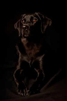 Studio portrait of a dog, isolated on a black background