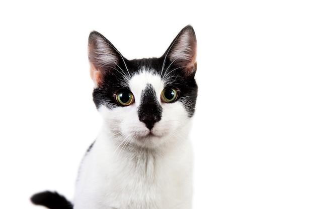 Студия выстрел черно-белого кота сидит на белом изолированном.