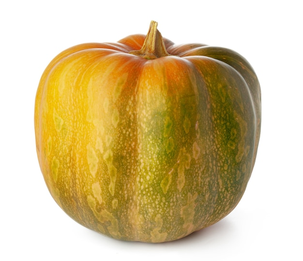Studio shot of a one pumpkin isolated on white background