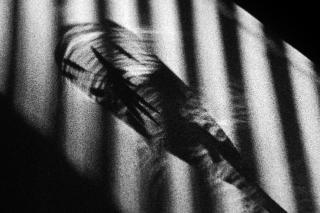 Study on shadows in black & white on gra