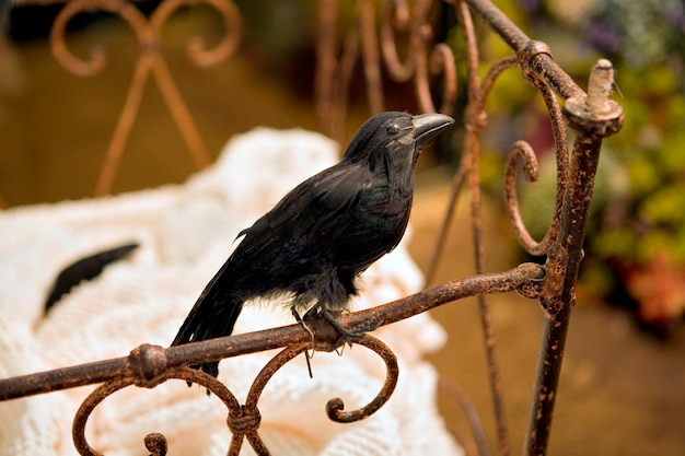 Stuffed blackbird in antique crib