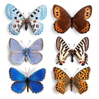 박제 곤충 나비 컬렉션 세트