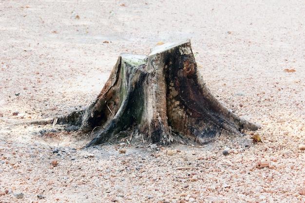 Stump of the cut tree.