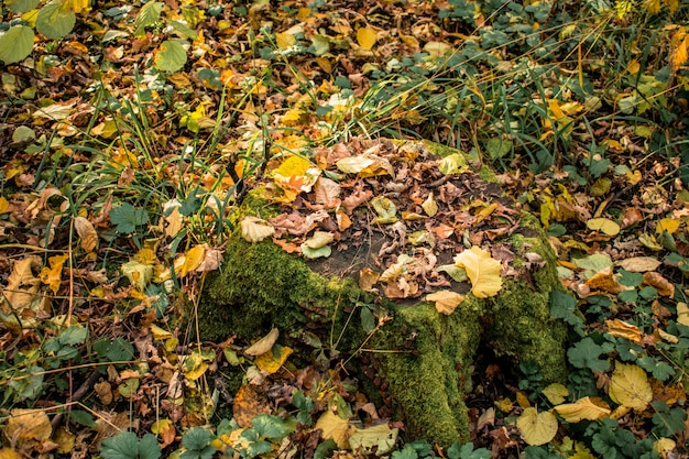 Stump forest leaves