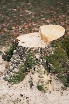 톱밥이 가득한 이끼 낀 나무의 그루터기