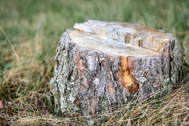 Stump on grass background in forest.