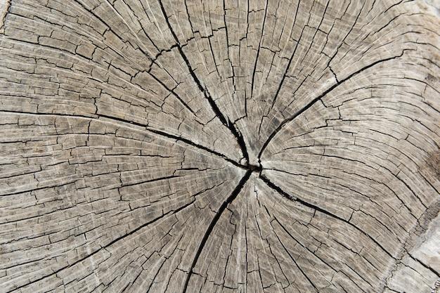 木の切り株、木の幹の断面