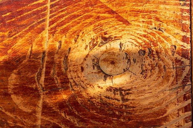 Пень срубленного дерева - участок ствола с годичными кольцами