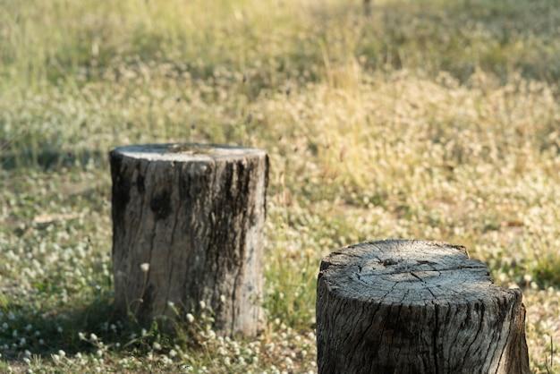 녹색 잔디 필드에 그루터기 나무 식물