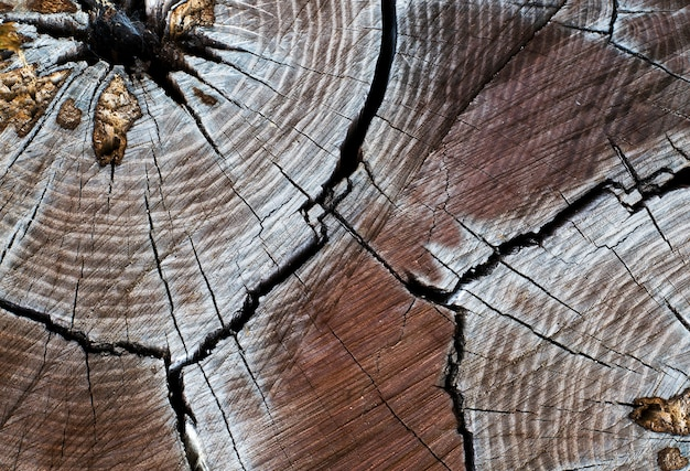 Stump with cracked wood