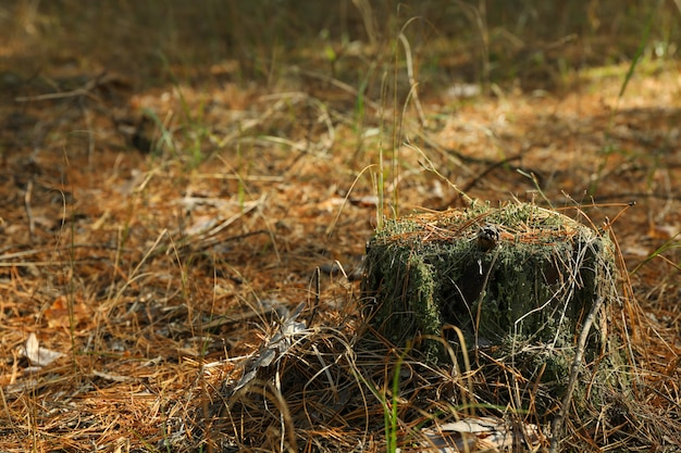 숲에서 이끼와 그 루터 기, 텍스트를위한 공간