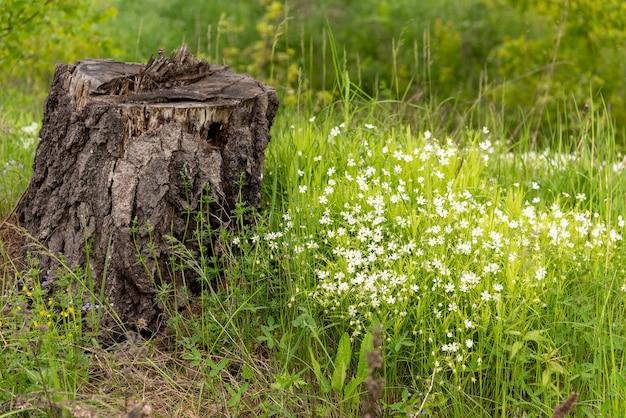 森の中の白い花の切り株。