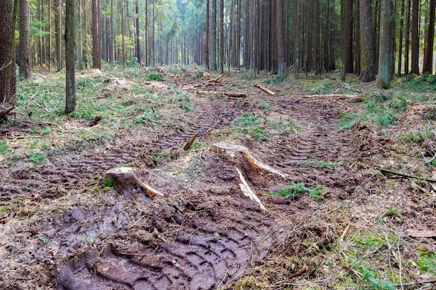 숲에서 그루터기, 가지 및 타이어 바퀴 추적