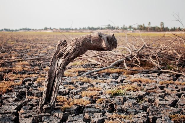 Stumps die on ground