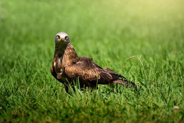 Потрясающий портрет птицы в дикой природе