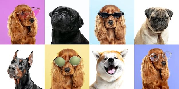 멋진 멋진 세련된 사랑스러운 개 포즈 귀여운 강아지 또는 애완 동물 행복한