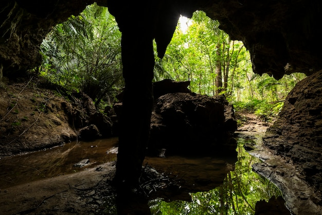 Stunning limestone cave view illuminated by outside natural light lush tropical vegetation