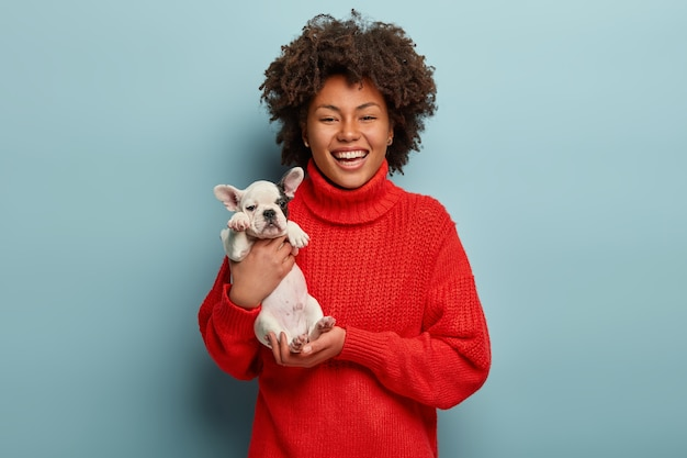 Stunning lovable girl carries little french bulldog puppy, expresses love to pet, smiles broadly, wears oversized red jumper, isolated over blue wall. women, animals and relationship concept