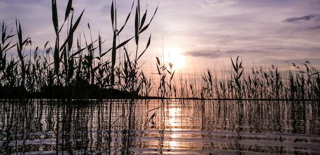 청동 저녁 석양에 잔잔한 수면과 갈대가있는 여름 호수의 멋진 그림 같은 풍경